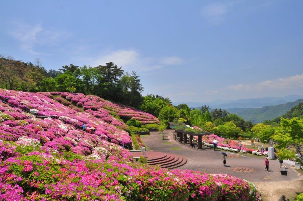 春花の画像 p1_3
