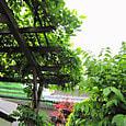 2011-6-4-36 ツル性植物