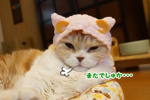 羊くんとウサギちゃん~♪(ダンシーズ編)