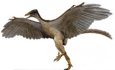 ニワトリ、ダチョウなど「飛べない鳥」の ...
