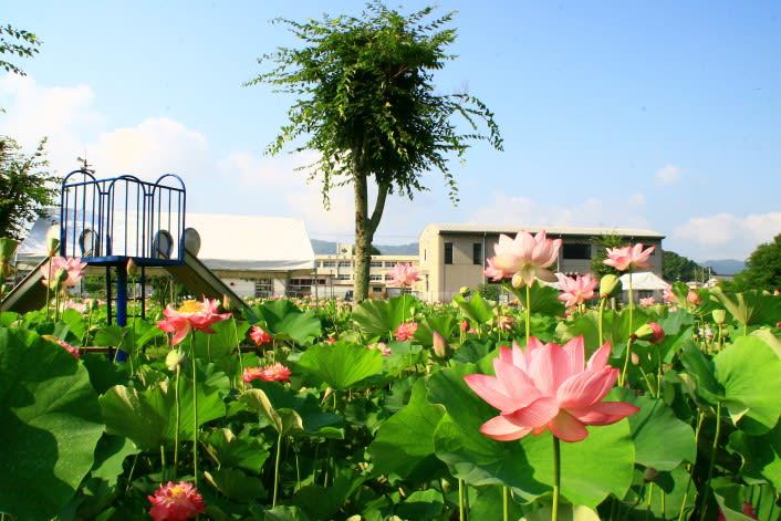 土佐市・蓮池公園 - 青い空・青い海! 土佐の風物詩
