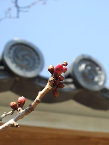 にむしんの梅