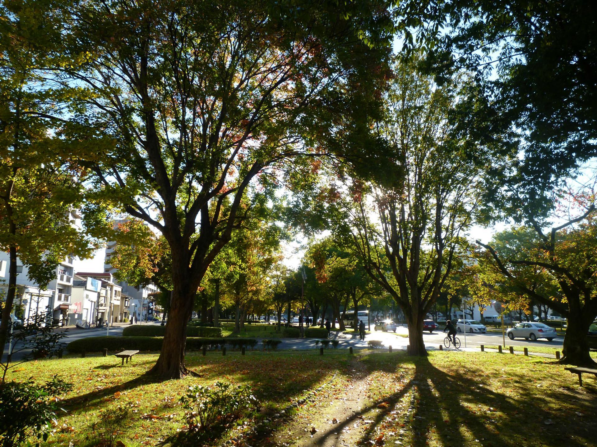 ようやく紅葉が始まった平和大通り! - ふるさとの山歩き、樹木、カメラ、家庭菜園の日記