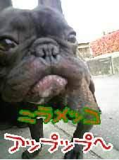 日刊☆銀次郎