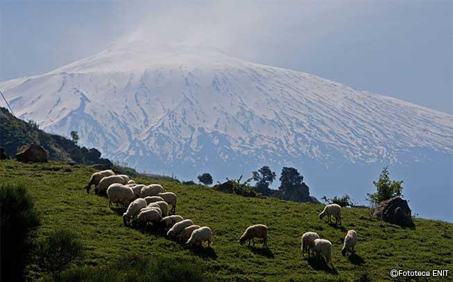 エトナ火山の画像 p1_22