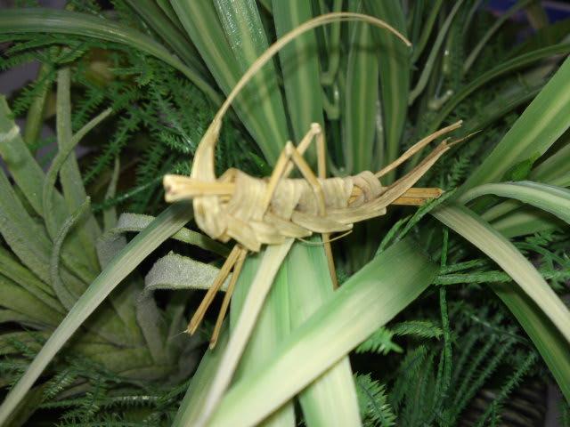 110820_grasshopper02