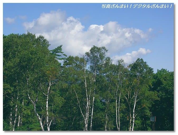 ダケカンバの画像 p1_28
