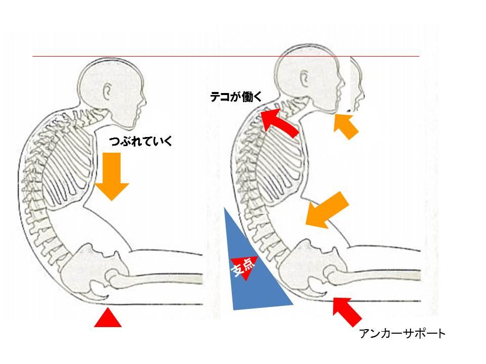 「胸椎 屈曲」の画像検索結果