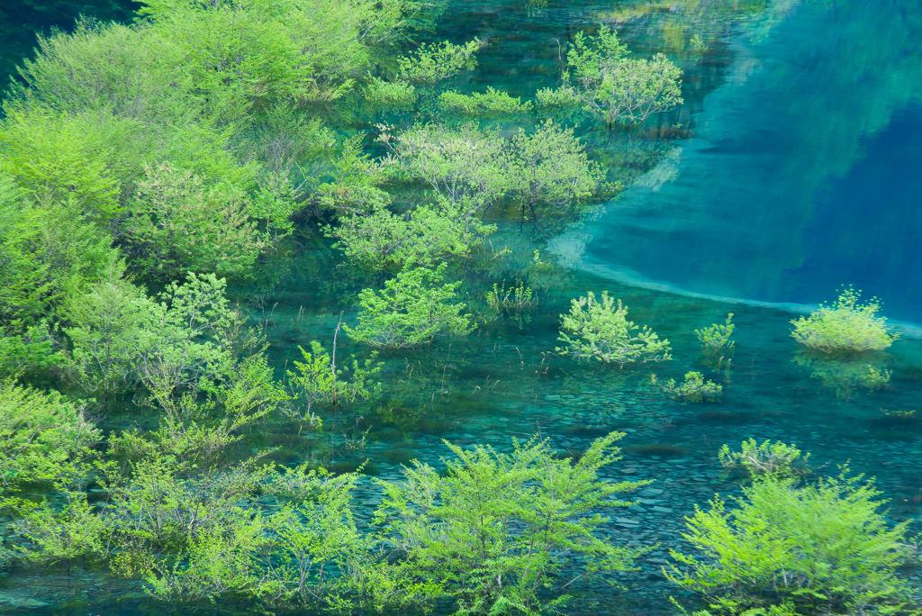 奥四万湖/浮島の写真