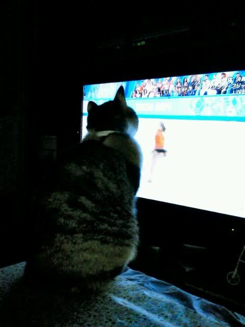 リプニツカヤにはまった猫 あたしもこんな風に舞いたい!
