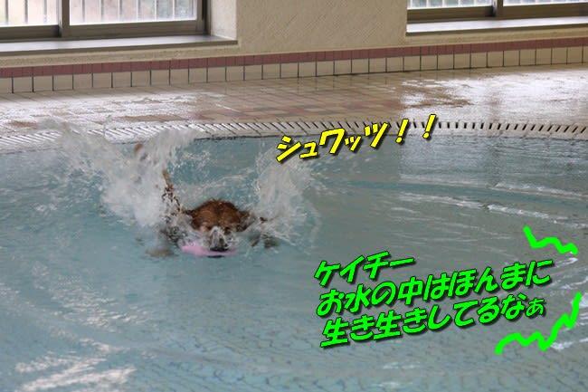 ミミちゃんもケイチーも、マイペースで お水の日を楽しみます 楽しそうに...  Come・かむ・