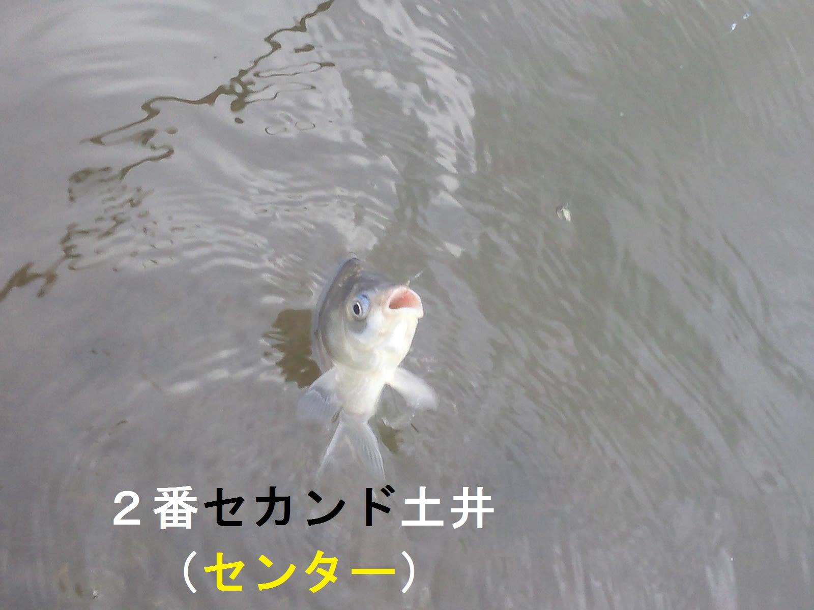 サード長嶋の画像 p1_37