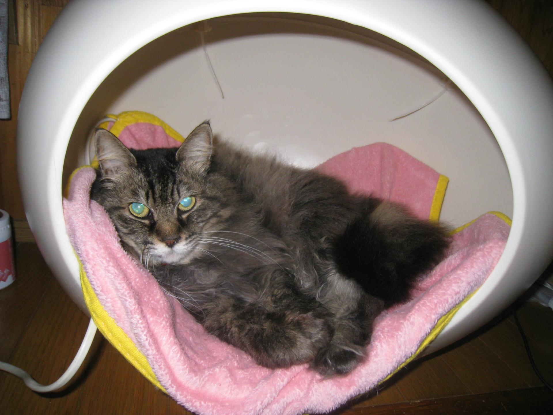 ヤフオクでついついまた猫ベットを買うという始末。 病死続きで猫に対するモチべが下がっていたので、可愛いのをと、つい\u2026。当然10年は使うぞ。