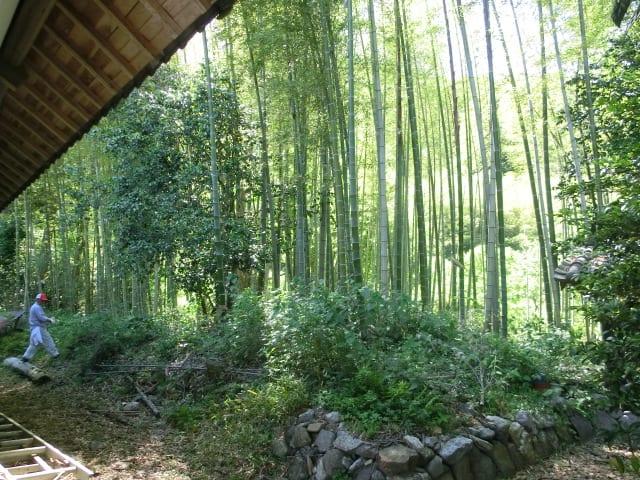 オーナーの竹林