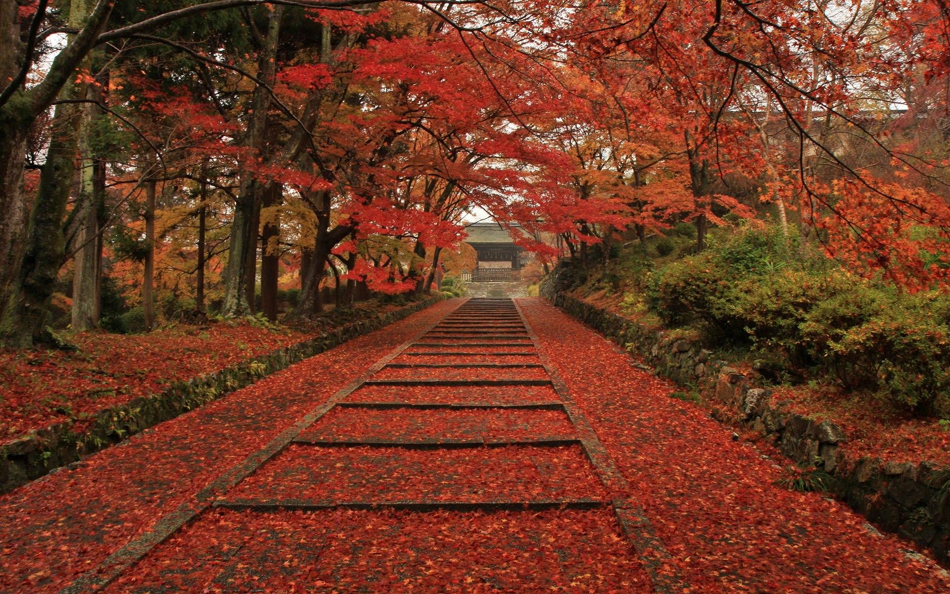 京都毘沙門堂の紅葉の壁紙