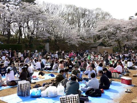 花見客 多摩川台公園でお花見 - GUINNESS BOOK