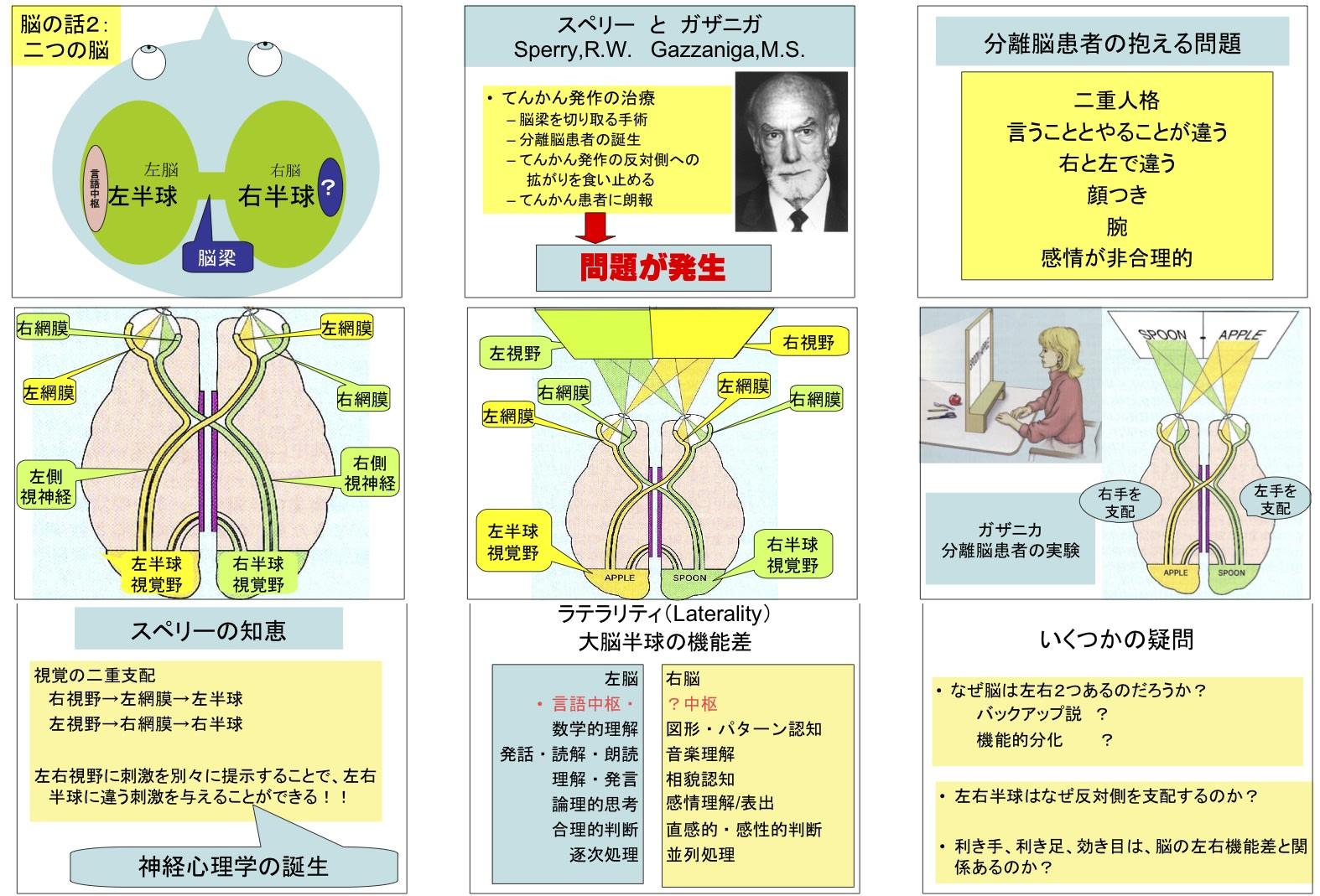生理心理学3:脳の話2「二つの脳...