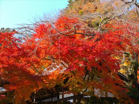 有馬温泉善福寺の紅葉