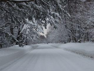 真中がどこか雪でわかりません。でも、観光道路は路肩によっても大丈夫です。。(脇に寄りすぎるとはまりますが、落ちる心配は0)