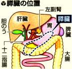 膵臓の位置の図