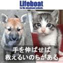 犬猫の里親募集中~NPO法人犬と猫のためのライフボート~