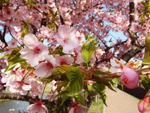 自転車道 多摩湖自転車道 ウォーキング : 花と葉っぱが一緒だとよりキ ...