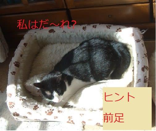 みっちゃんのブログ <HOTな,お茶time2号館>