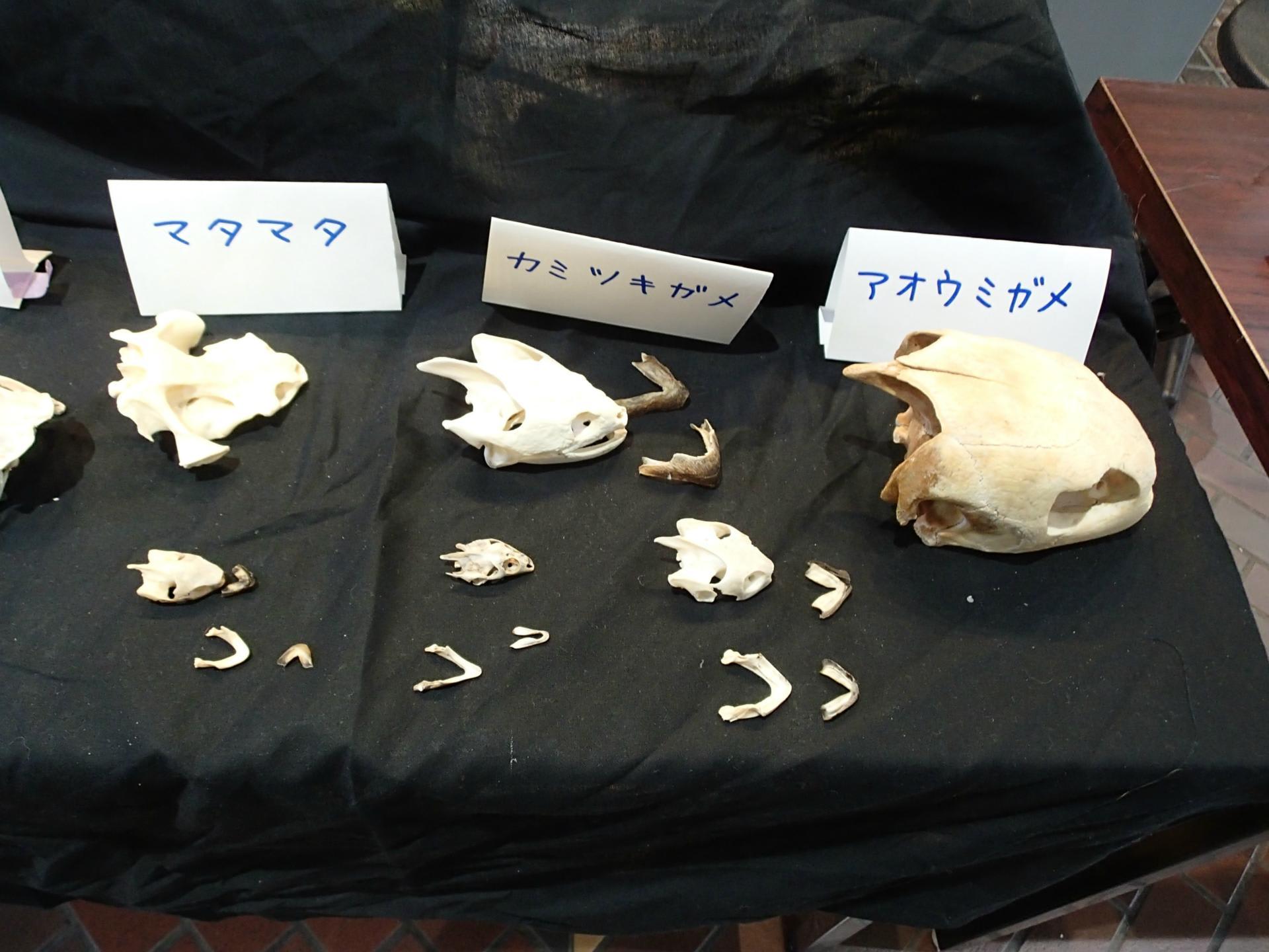 カメに特化した方の出展品。 サルの頭が一杯。 鳥専門の方の出展品 模型... 話しは前後しますが