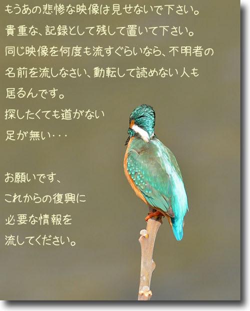 明日もカワセミ色☆