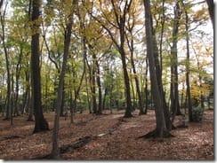 (2)黄葉と落葉の独歩の森