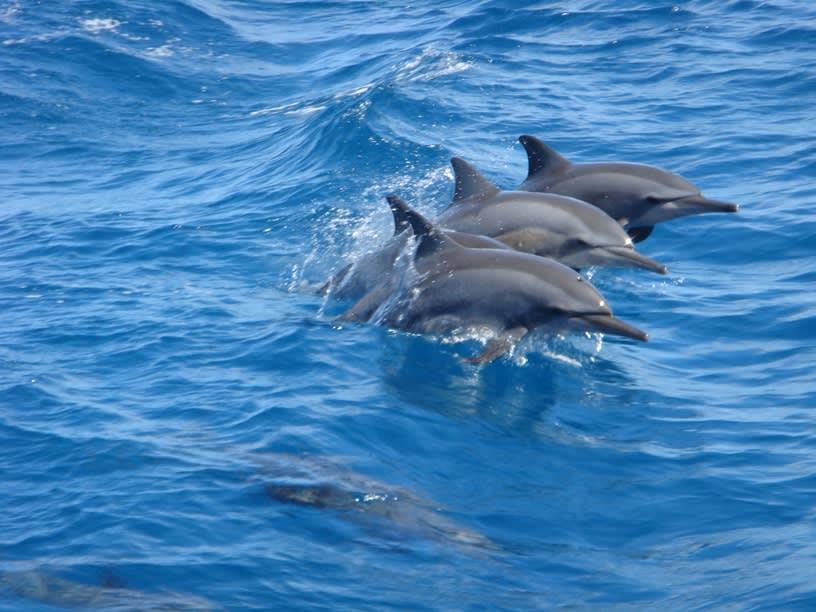 グアムの海でイルカ