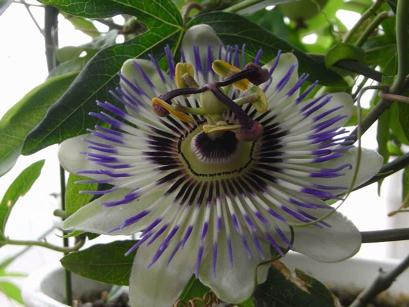 一度見たら忘れられない個性的な花です♪