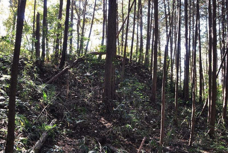 タキハラ1号墳丘