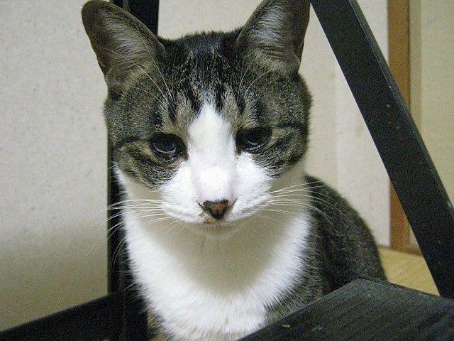猫背椿の画像 p1_33