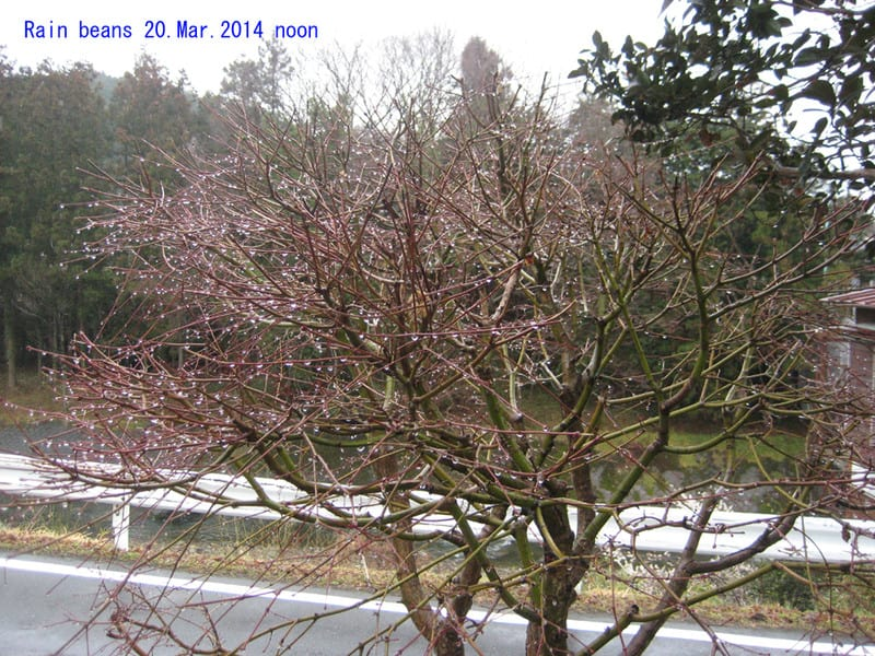 Rainbeans2014