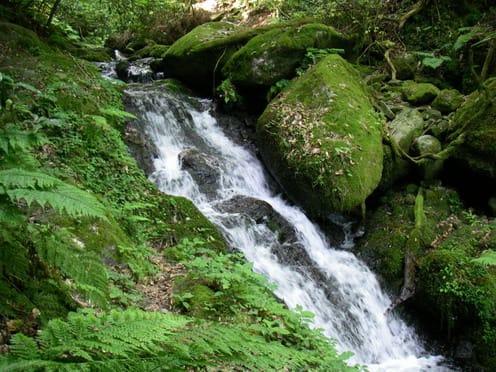 石清水が飲める場所もいくつかあり、冷たい水で喉を潤す。 井原山・洗谷ルートふたたび ……私の好き
