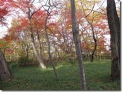 (1)紅葉の境山野緑地北側