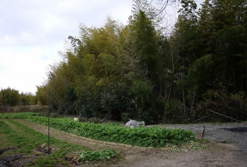 歌姫赤井谷横穴墓群前