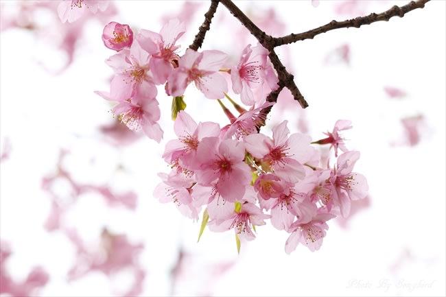 春の目覚め - さきたま自然日記 ...