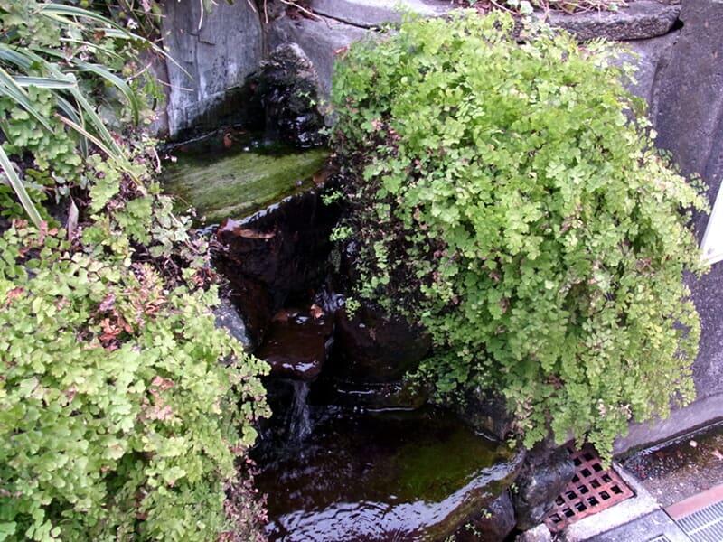 02月24日 滝坂湧水
