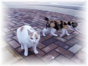子猫は三毛と茶色の2匹ですクリックで親子3匹です