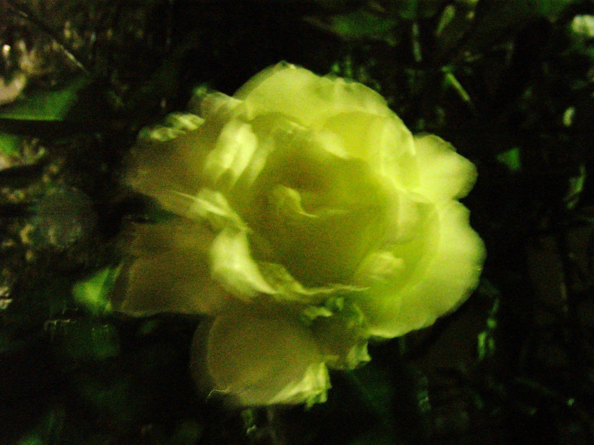 フォーリーブスの画像 p1_6