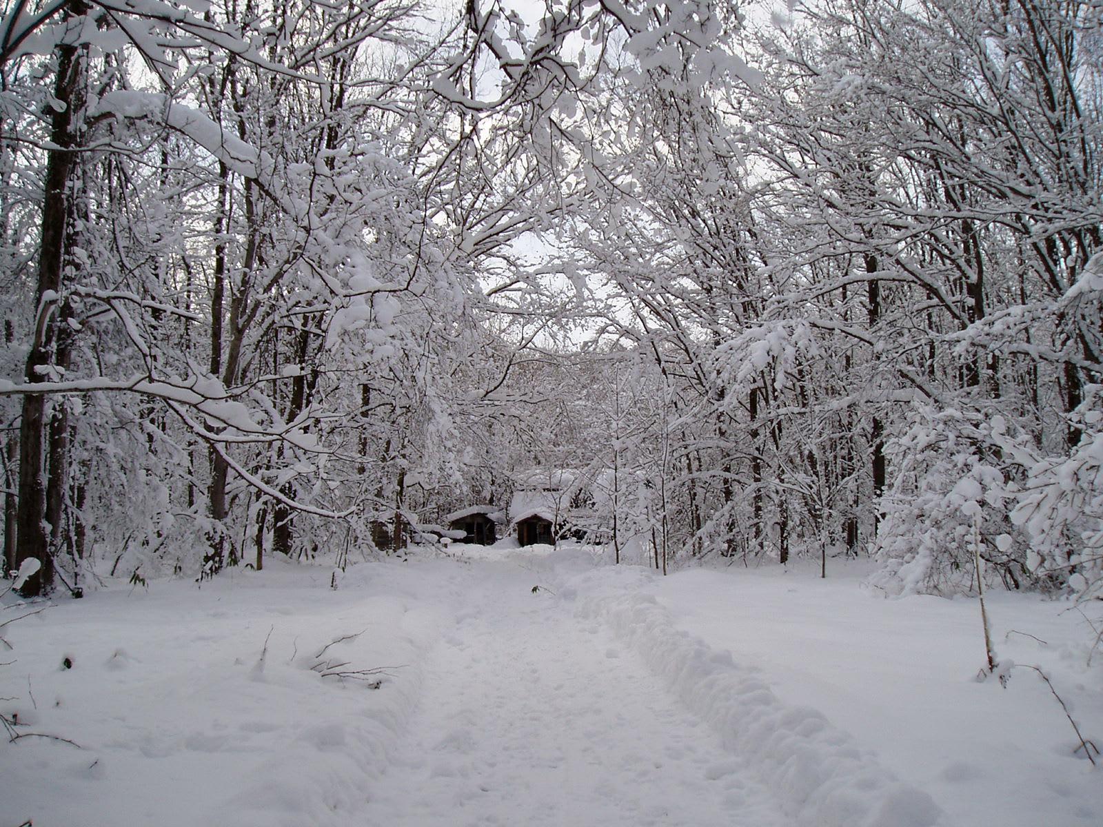 冬の「麓郷の森」 - 猫と雪あか...