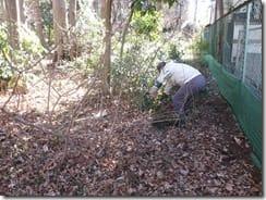 ④「独歩の森西側の外来種除去」
