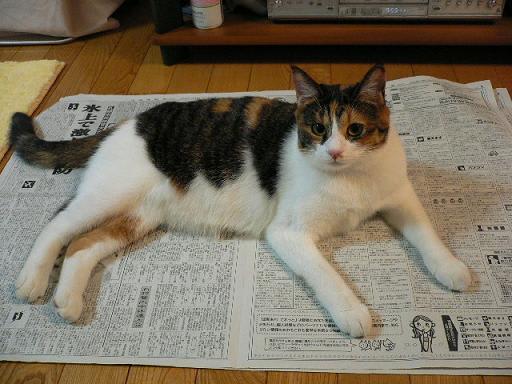 新聞紙の上に乗る