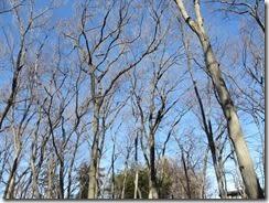 ➇冬の青空と独歩の森の梢。