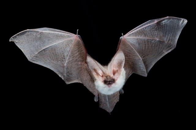 コウモリの画像 p1_32