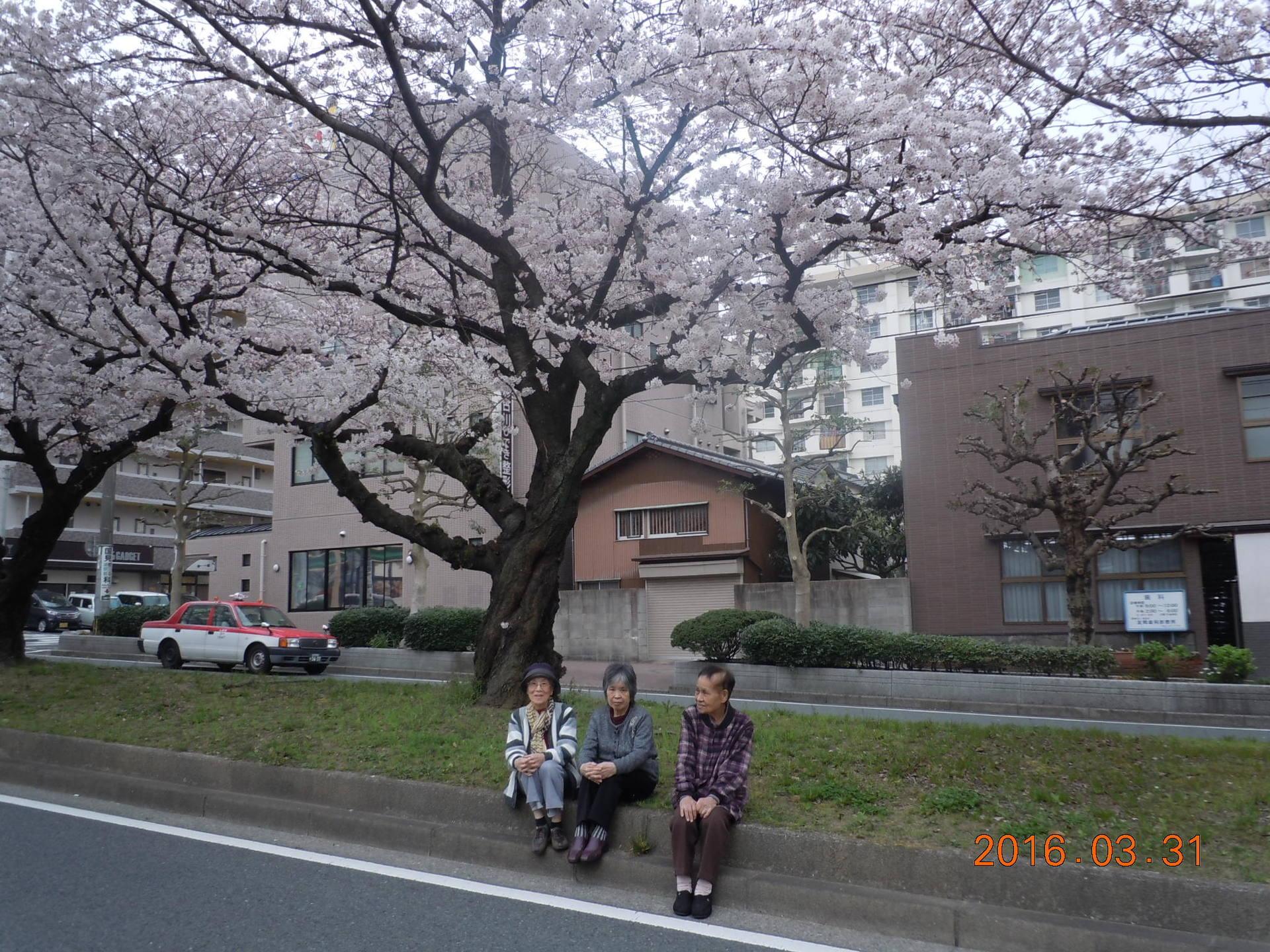 桜見学ドライブ