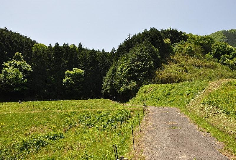 スズラン群落前の道