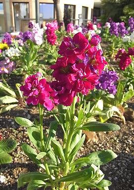 季節の花と言葉の花束